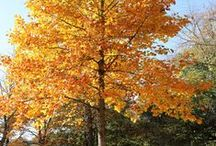 OUTDOOR -  TREES