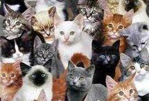kit kat / cuteness overload / by MissBittersweet