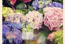 Gardens / by Debbie Coleman