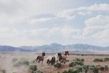 road trip / by Ashley Tarr