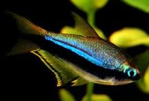 Aquarium Fish / by Lydia BK