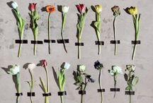 STIJL& flowers