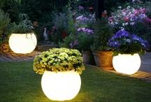 Plants/Garden/Outdoor rooms