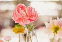 Flores / by Paty Vaca