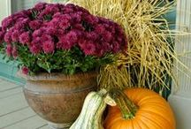 Fall Decorating Ideas / by Sibcy Cline Realtors