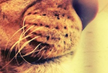 Brandspiration: Love Light Lions / by Braid Creative