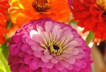 Flowers / by Linda B
