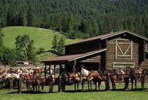 Idaho Cowboy Experience / Work alongside a real cowboy or just enjoy communing with nature from horseback; Idaho has a western vacation for you. / by Visit Idaho