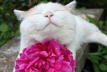 Animals / Photos of adorable animals.