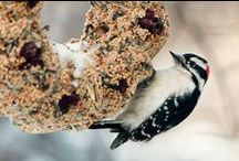 Birds / Beautiful photos of our Avian friends.