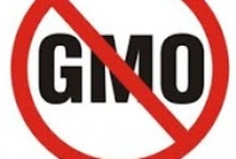"""Say NO to Monsanto,GMOs & Frankenfish / The FDA is not to be trusted!  Are they in the pocket of Monsanto?  Most of Europe, including Russia, has said """"NO to GMOs!""""  So what's the problem in the USA? / by """"Pearl"""""""