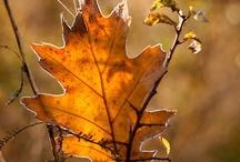 Fall / My favorite season...