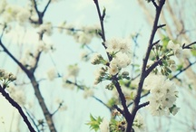 Simply Flowers / by Kathryn Church