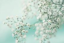 Spring / by Karen Erickson