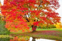 Fantastic Fall / by KRISSY BAM