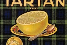 Vintage Fruit  / A collection of vintage fruit crate labels dating from 1915-1950