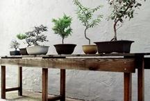 Outdoor gardens/plants/spaces