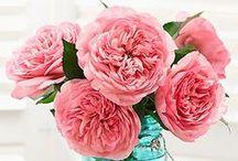 Pretty Flowers / by Jocelyn H.