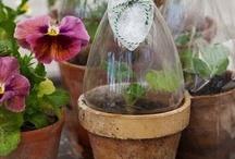 Terrarium, Conservatory, Garden, Plants