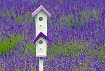 In the Garden - Birdhouses / by Purple Moon Designs Hair Jewelry