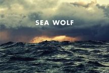 Sea Wolf / La vida en el mar