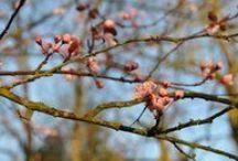 Art de Vivre - Printemps / C'est toujours agréable de vivre à la #campagne et de profiter des toutes premières fleurs du #printemps dans son #jardin.
