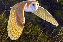 Owls (: