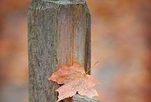 The Seasons / Beautiful scenes, art, and feelings of the different seasons!