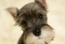 For the Dogs / Recipes and Ideas to make Pooches happy!