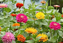 Gardening / How does you garden grow and lovelies to adorn it!