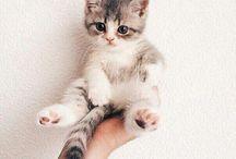 CAT / Cute