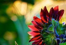 Flower Gardening / by Amy Legg