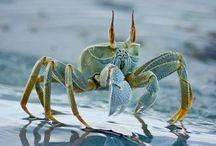 Ocean Creatures / Amazing underwater creatures. / by Roxanne Gilfus