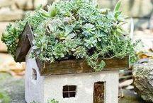 green stuff growing / by Jan Fogel