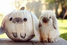 Happy Pumpkin / Autumn and Halloween