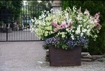 Spring Container Planting