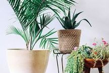 House Plants and Succulents / Beautiful house plants to look great, clean the air, and add some colour.