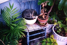 Kitties / by Andraya O.