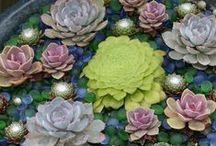 I Love Succulents / succulent plants / by Andraya O.