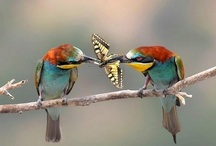 flutter by / by Cynthia Cavitt