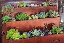 Gardening/Planting / by Shelley Price