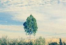 The alone tree / Tree alone photo