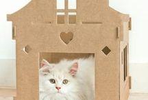 Ultieme kattenpandjes van karton