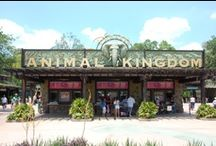 Disney's Animal Kingdom / Animal Kingdom is my second favorite Disney World theme park.  Here are some of the wonderful things this park has to offer.