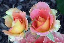 Flowers / by Rhonda Grandhagen