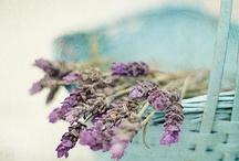 Lavender / by The Vintage Farmhouse