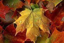 ~~Fall~~ / by Rhonda Grandhagen