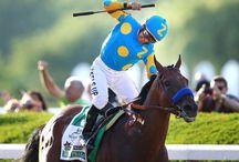 Horses : An Equine Affair