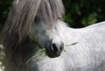 All The Pretty Ponies! / Dedicated to Ponies and Miniature Horses