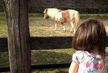 Horses: An Equine Affair 1A Closed / Closed.  The first 1000 Horse Pins